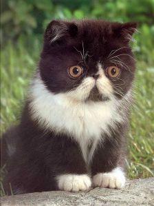 Gremlin or Kitten?