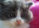 kitten-with-hotpink